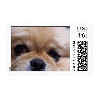 Cute Pekingese Puppy Postage Stamp