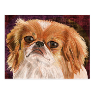 Cute Pekingese with white /orange brown coat Postcard