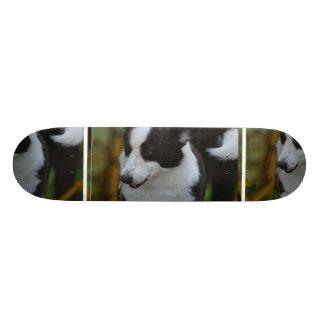 Cute Pembroke Corgi Dog Custom Skateboard