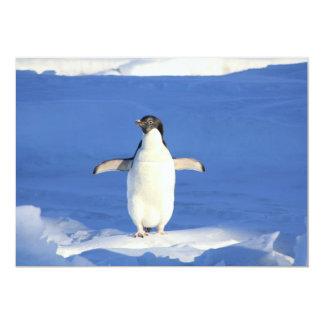Cute Penguin Card