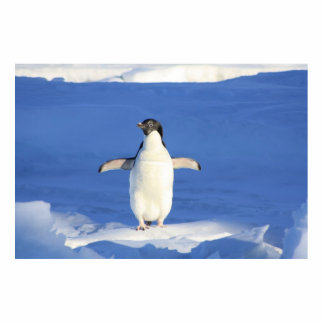 Cute Penguin Acrylic Cut Outs