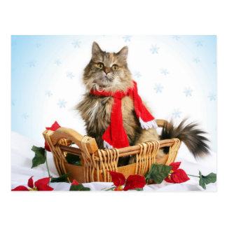 Cute persian cat with x-mas decoration postcard