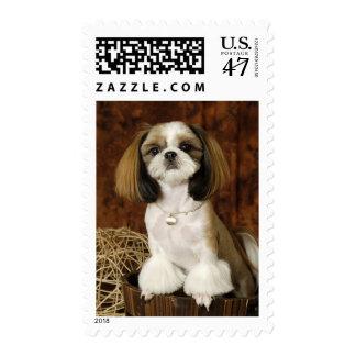 Cute Pet Animal Postage