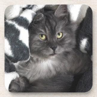 Cute Pet Kitten Cat Peace Love Destiny Coaster