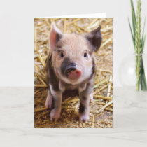 Cute Pic of a baby Pig Holiday Card