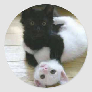 Cute pic of black and white kittens classic round sticker