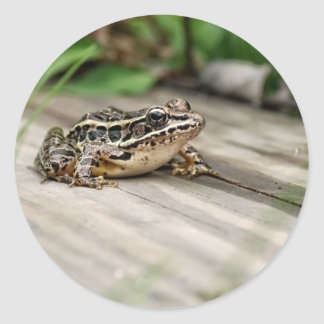 Cute Pickerel Frog Classic Round Sticker