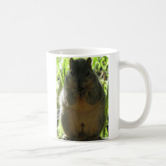 Cute picture of a little squirrel eating a nut coffee mug