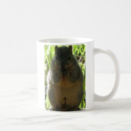 Cute picture of a little squirrel eating a nut classic white coffee mug