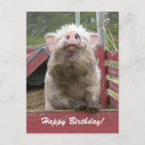 Cute Pig Happy Birthday Greeting 42a Postcard