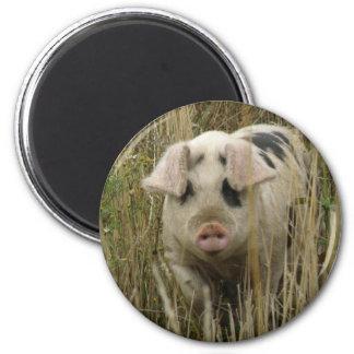Cute Pig Magnet
