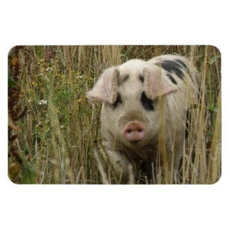 Cute Pig Premium Magnet