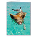 Cute pig swimming in water greeting card