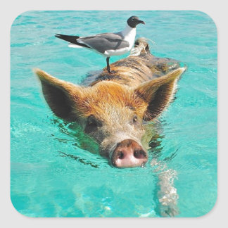 Cute pig swimming in water square sticker