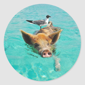 Cute pig swimming in water round stickers