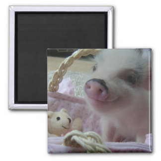 Cute Piglet 2 Inch Square Magnet