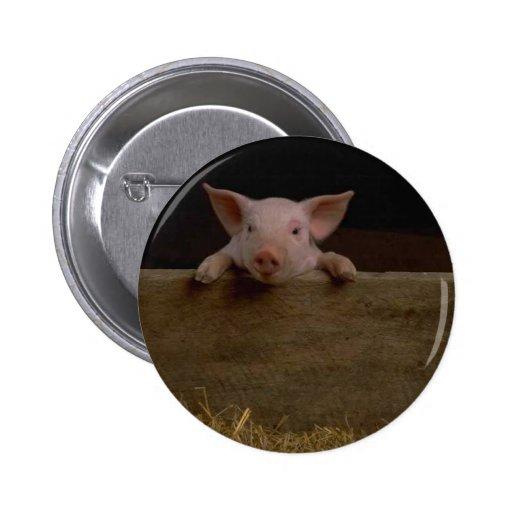 Cute Piglet Button