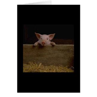 Cute Piglet Card