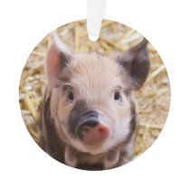 Cute piglet ornament