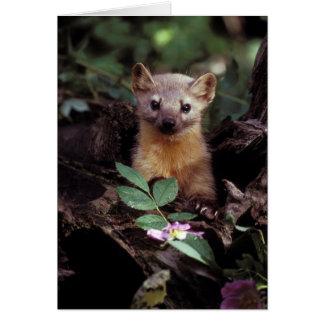 Cute Pine Marten Greetings Card