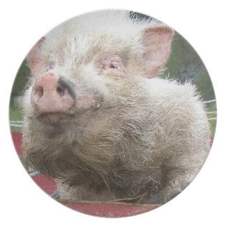 Cute Pink Mini Pig Plate