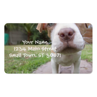cute pit bull dog brown nose close Double-Sided standard business cards (Pack of 100)