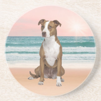 Cute Pitbull Dog Sitting on Beach with sunset Drink Coaster
