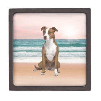 Cute Pitbull Dog Sitting on Beach with sunset Gift Box