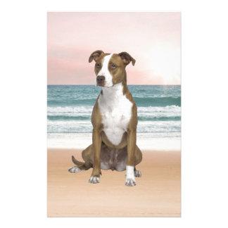 Cute Pitbull Dog Sitting on Beach with sunset Stationery