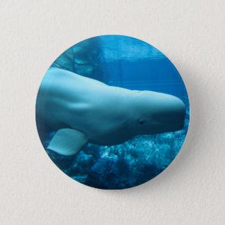 Cute Playful Beluga Whale In Aquarium At Georgia Pinback Button