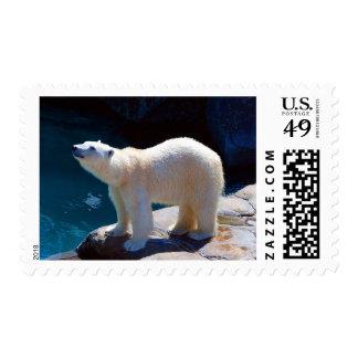Cute Polar Bear by Pool Arctic Animal Stamp