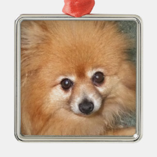 Cute Pomeranian Face Metal Ornament