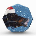 Cute Pony Christmas Award