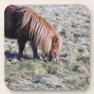 Cute pony grazing on the paddock. drink coaster