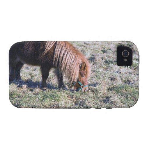 Cute pony grazing on the paddock. iPhone 4/4S cases