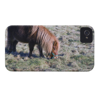 Cute pony grazing on the paddock. iPhone 4 cover