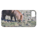 Cute pony grazing on the paddock. iPhone 5 covers