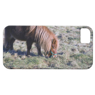 Cute pony grazing on the paddock. iPhone SE/5/5s case