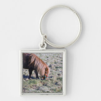Cute pony grazing on the paddock. keychain