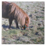 Cute pony grazing on the paddock. large square tile