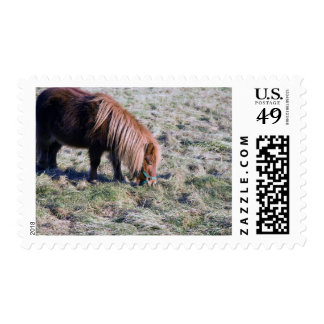 Cute pony grazing on the paddock. postage