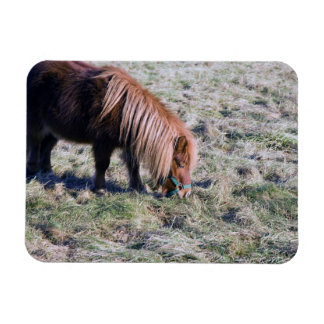 Cute pony grazing on the paddock. rectangular photo magnet