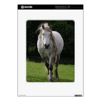 Cute pony photograph iPad skins