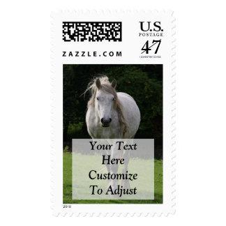 Cute pony photograph postage