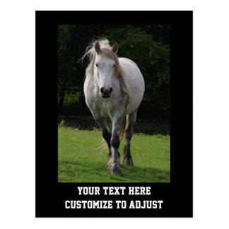 Cute pony photograph postcard