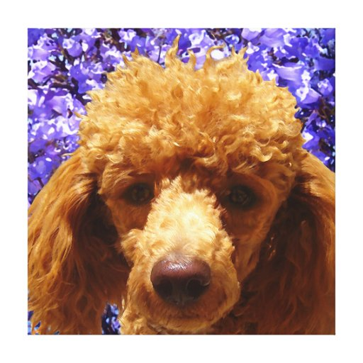 Cute Poodle Canvas Prints
