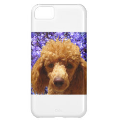 Case-Mate Barely There iPhone 5C Case with Poodle Phone Cases design