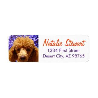 Cute Poodle Label
