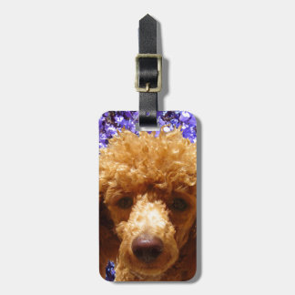 Cute Poodle Luggage Tag
