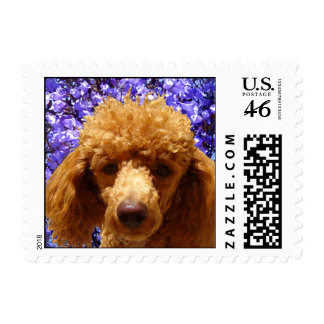 Cute Poodle Postage Stamp